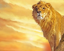 Lion_king_wallpaper